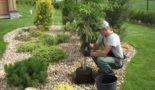 Сажать декоративные деревья возле дома