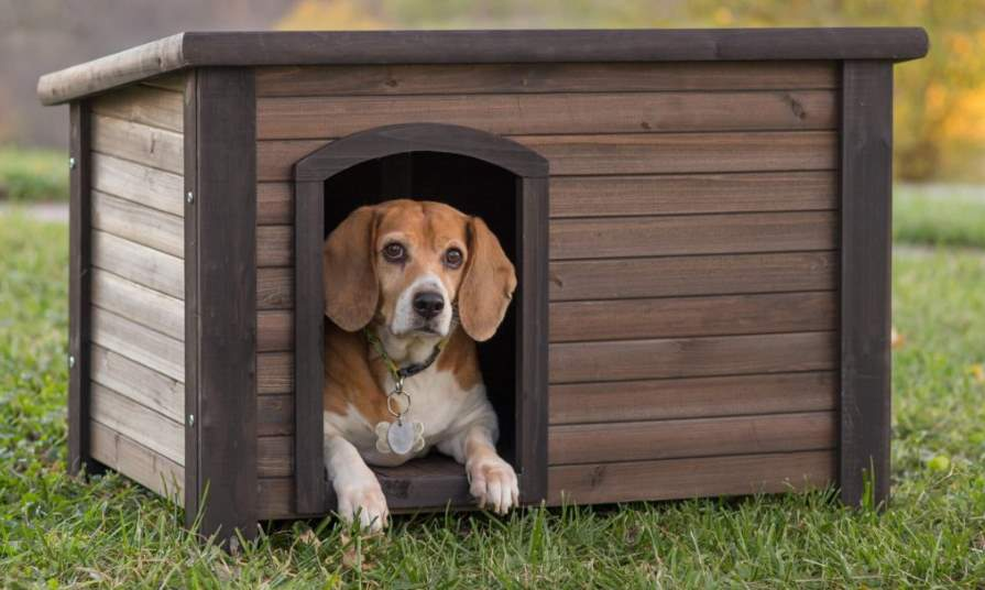 Будка для собаки: как построить своими руками, чертежи, фото, размеры и идеи