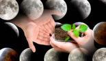 посадки по лунному календарю