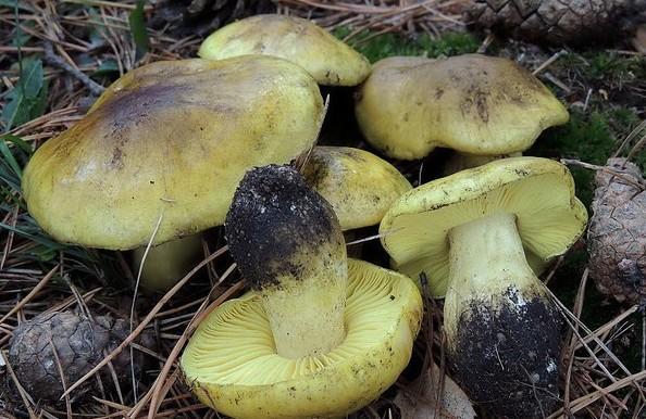 Ножка гриба