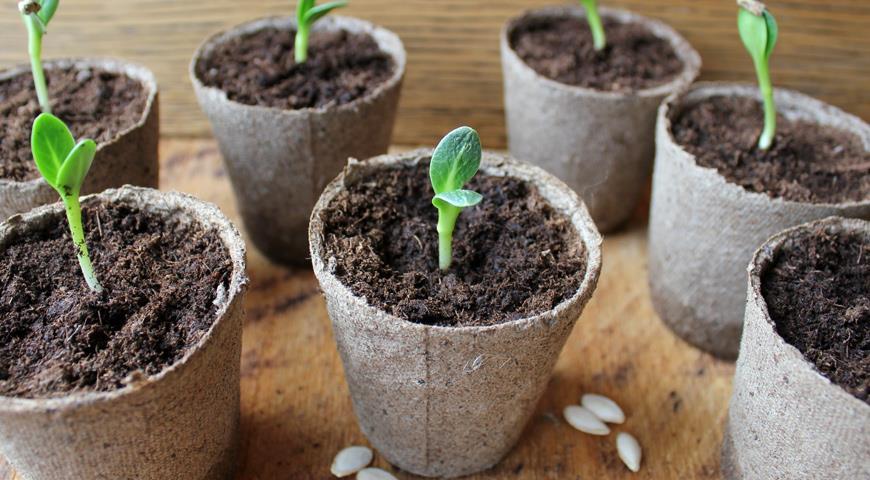 способы выращивания огурцов
