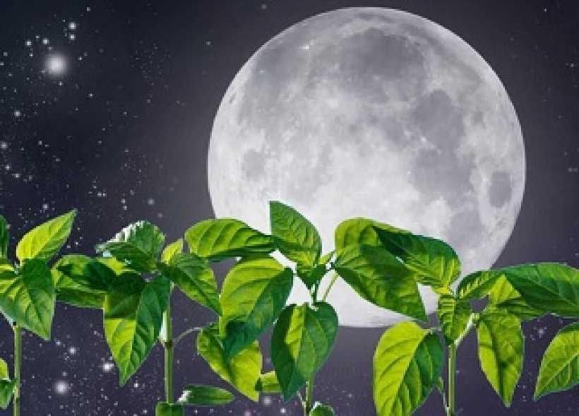 луна и растение