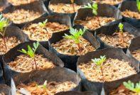 Когда сажать бархатцы на рассаду в 2020 году по лунному календарю, чтобы зацвели в мае, июне: сроки посева семян на рассаду в Москве, Подмосковье и других регионах