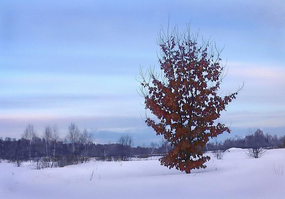 Какие деревья не сбрасывают листья на зиму, почему листав должна опадать, о чем свидетельствует отклонение и что делать