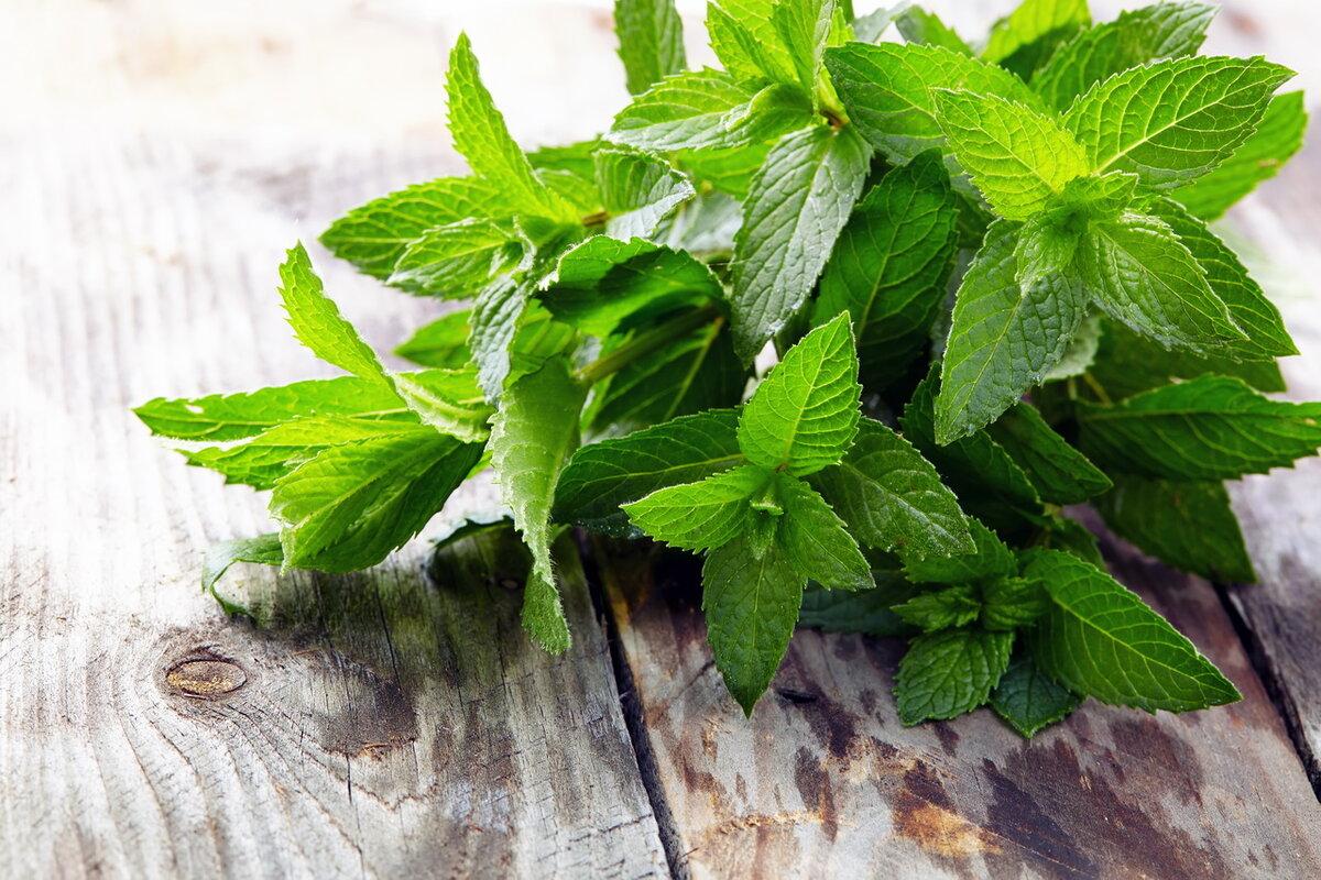 Лучшие способы, отражающие то, как хранить свежую мяту, советы по заморозке травы для сохранения аромата и пользы растения
