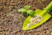 Благоприятные дни для посадки огурцов в мае 2020 года по дням в открытый грунт и теплицу: сроки посева семян по лунному календарю садовода и огородника в таблице