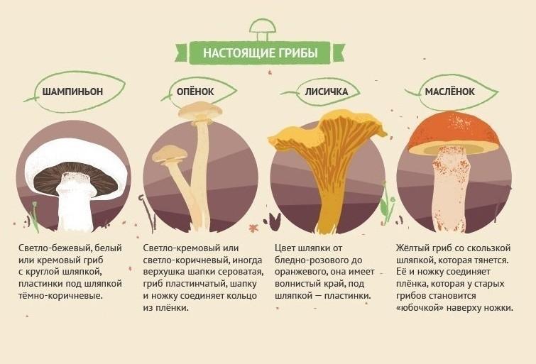 Признаки съедобных грибов