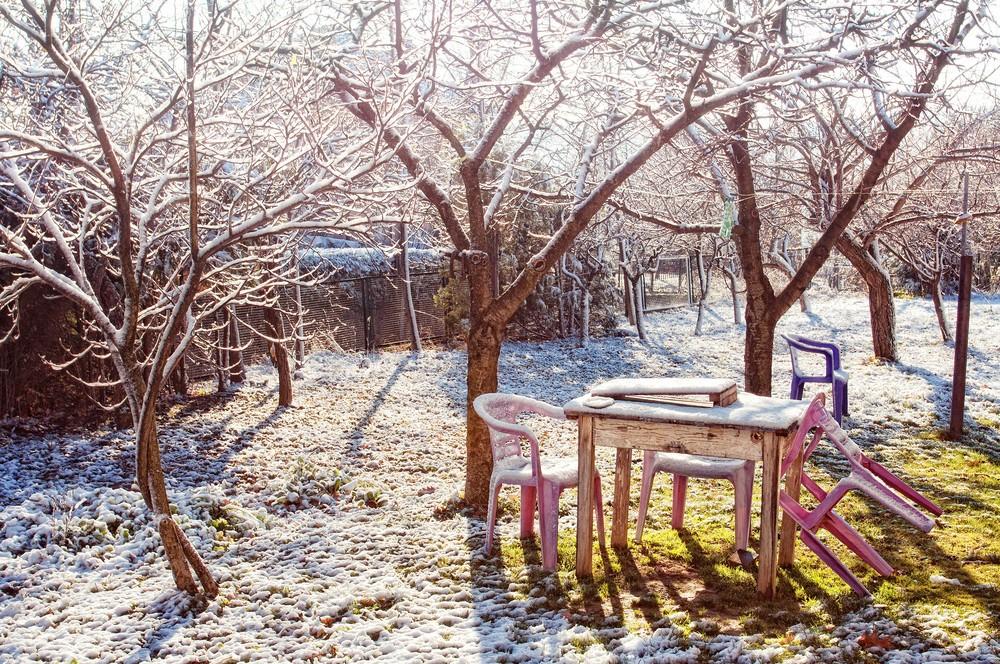 деревья без листьев зимой
