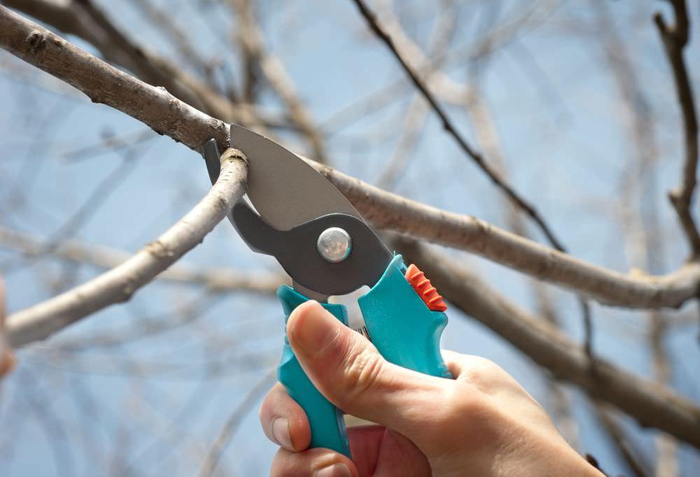 инструмент для обрезки груш