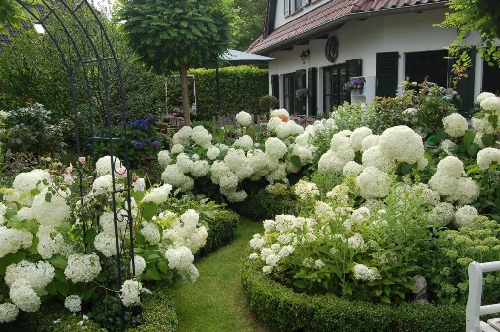 гортензиевый сад фото постоянно хватало