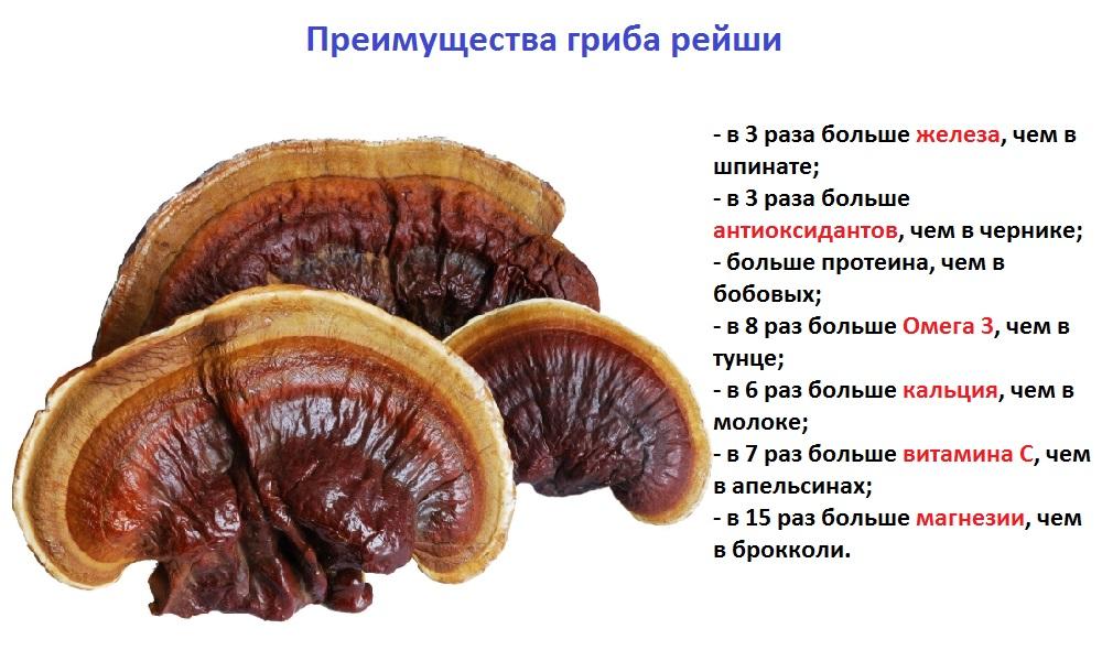 Преимущества гриба