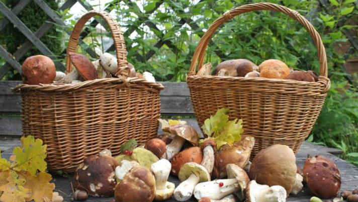 Лечение отравления грибами