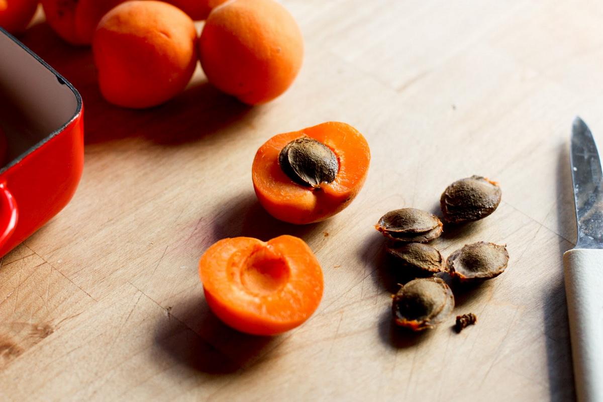 вырастить из косточки абрикосы