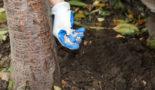 подкормка груши осенью