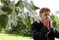 цветение для аллергиков