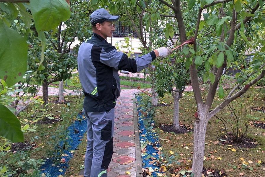 уход за абрикосом осенью