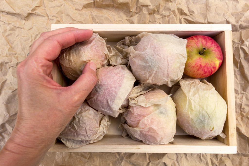 Хранение яблок в домашних условиях на зиму, оптимальные условия, подходящие сорта, варианты хранения и возможные ошибки