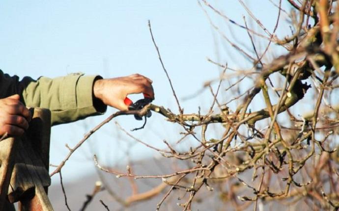 Обрезка яблонь зимой: сроки зимней обрезки, схемы, правила проведения процедуры, видео уроки для чайников и температурные условия