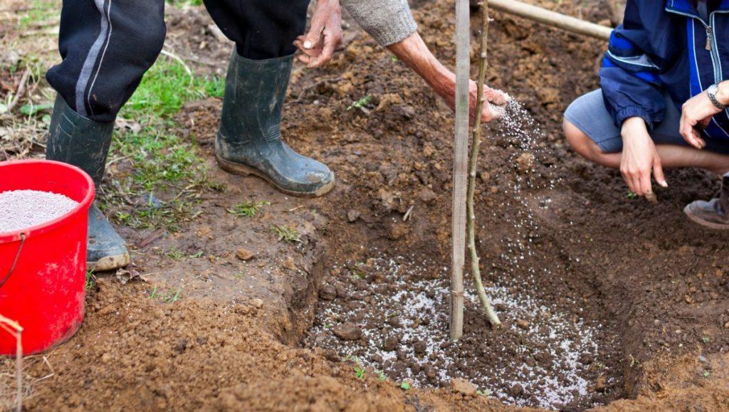 Посадка яблони осенью, пошаговое руководство, видео для начинающих, подготовка ямы для посадки саженцев и рекомендации
