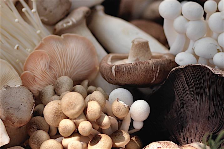 Аллергия на грибы