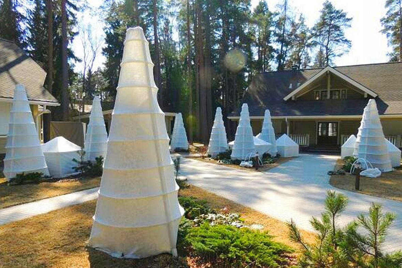Защита деревьев от морозов