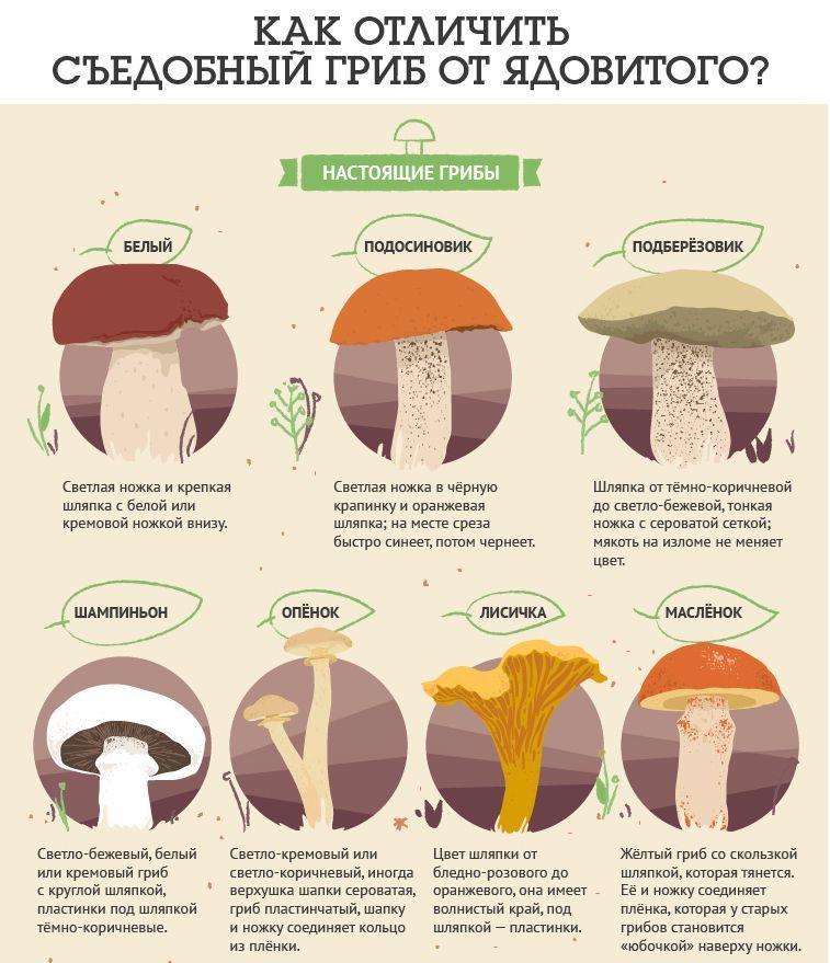 Признаки настоящих грибов
