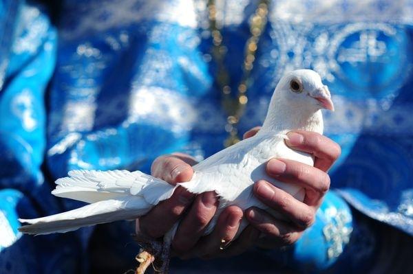 Традиция выпускать голубей