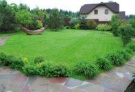 Как правильно делать газон на даче