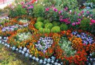 Низкорослые цветы для клумбы
