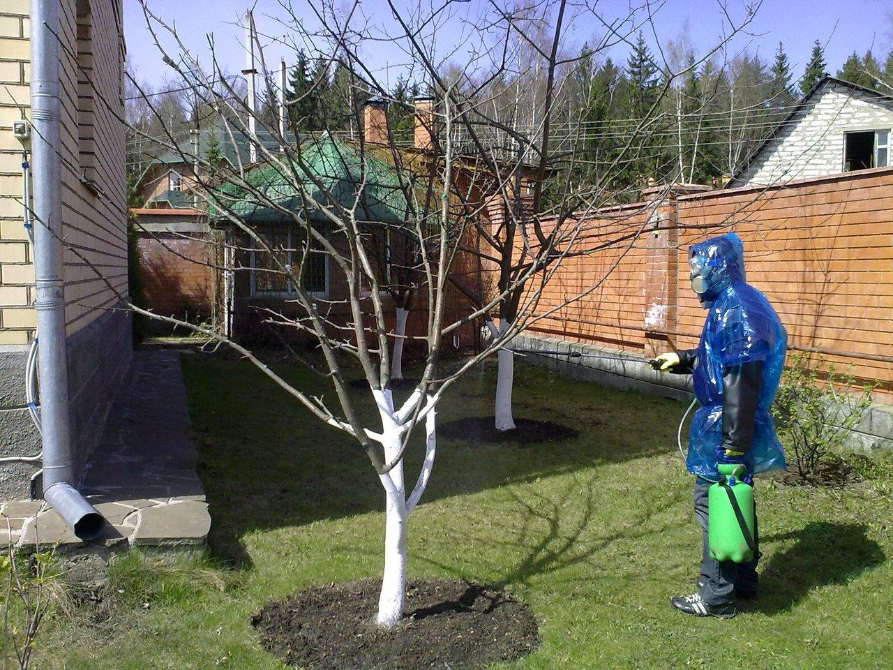 опрыскивание яблони осенью