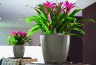 Цветущие комнатные растения: популярные и экзотические цветы с названиями, кратким описанием и фото