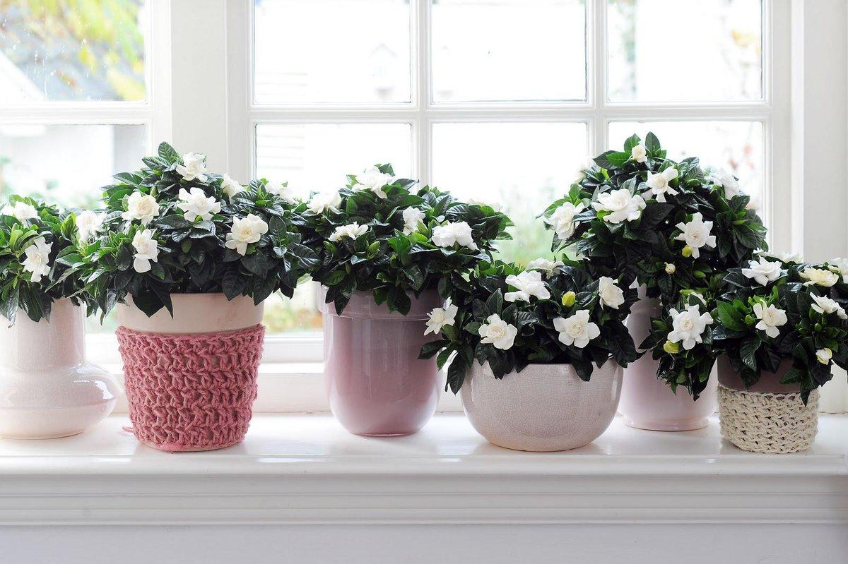 пышное цветение комнатных растений