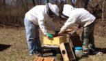 Как ухаживать за пчелами начинающему пчеловоду