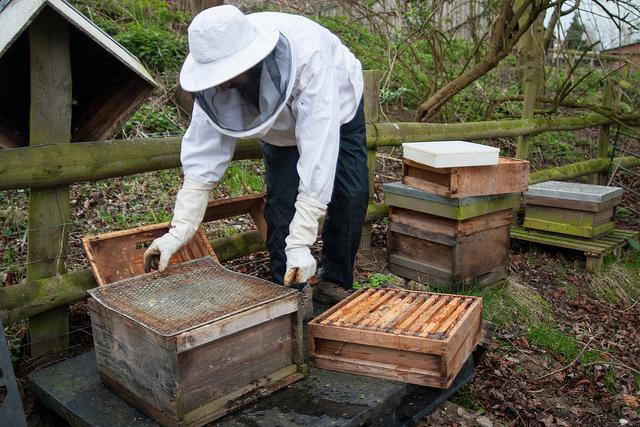 Пасека для начинающих пчеловодов